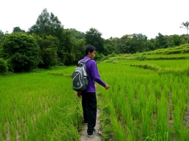 Fab guide in rice paddy