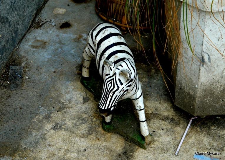 Zebra Bangkok